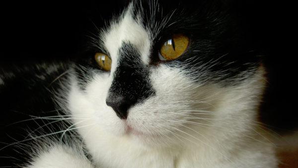 猫との対話#11|教えを理解できない本当の理由。