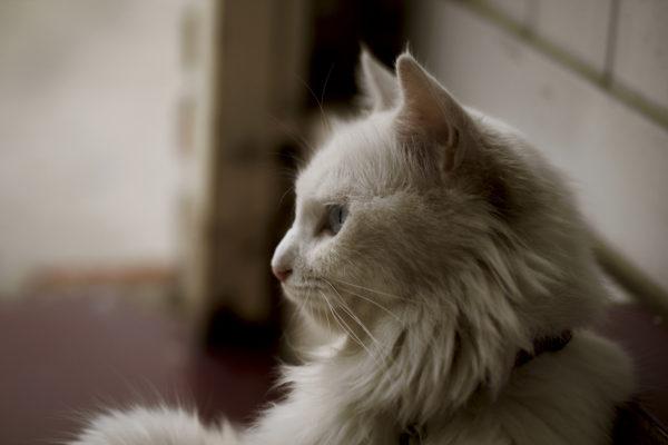 猫との対話#12|あなたの努力が評価されない本当の理由。